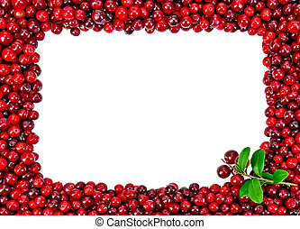 Framed from foxberry with a sprig isolated on white...