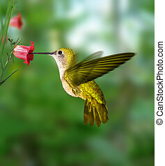 hummingbird flying to get nectar