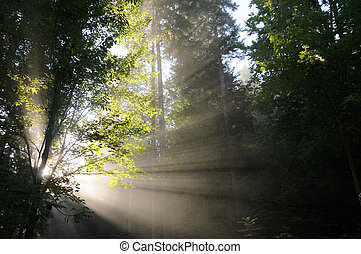 light shaft through trees - Light shaft through trees