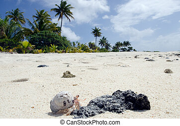Hermit Crab - Aitutaki Lagoon Cook Islands - Hermit crab...
