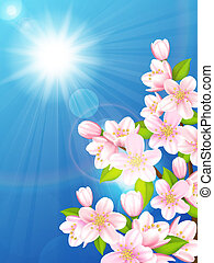 Cherry tree - Vector illustration blooming cherry trees on...