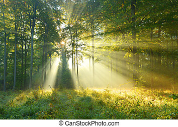 Forest dawn - Beautiful autumn morning in the forest