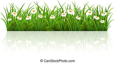 Summer grass - Vector illustration with a beautiful summer...