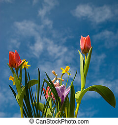 Spring in the air - Spring with flowers in the air