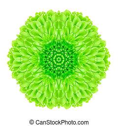 verde, Concêntrico, flor, isolado, branca, Mandala,...
