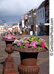 Primulas at the street - containers with primulas at the...