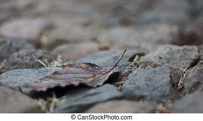 Dry Leaf on Rocks Dolly