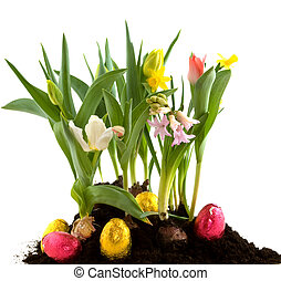 Easter flowers - easter eggs in the spring garden with...