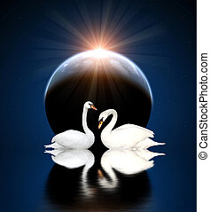 Two swans - Two white swans on black background