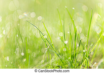 Green grass texture with water drops - Green grass texture...