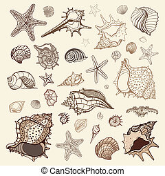 Sea shells collection Handdrawn vector illustration
