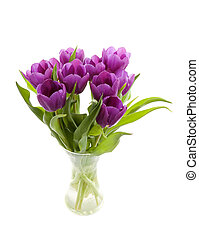 Purple Dutch tulips in vase over white background
