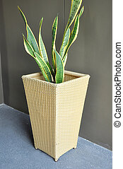 Green plant in Rattan flower pot - Green tropical plant in...