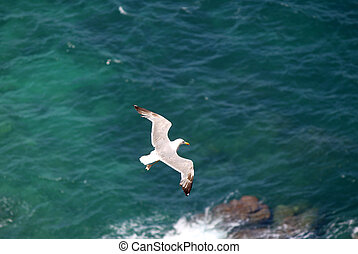 The Yellow-legged Gull Larus michahellis, in Natural Park of...