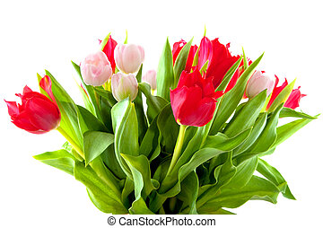 bouquet tulips in red and pink