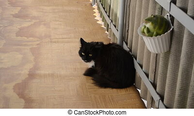 black cat balcony - wince black cat in balcony and woman...
