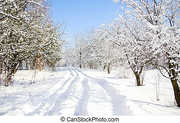 trees in the snow in beautiful winter forest - a trees in...
