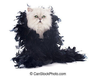 white persian cat and boa in front of white background