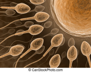 Sperm & Ovum - The sperm and ovum, concept  of life.