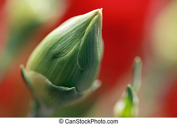 flower bud in morning sunlight
