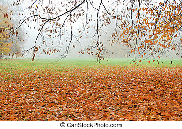 Autumn leaves fallen on the ground in misty forest park