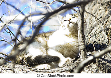 Small kitten - The small kitten plays outdoors near a big...