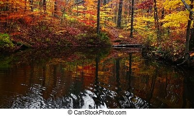 Yellowwood Forest Reflection Loop - Vibrantly colorful fall...