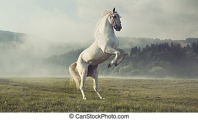 Strong white horse on the autumn meadow - Strong white horse...