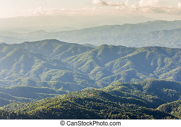 Ariel view of forest mountain