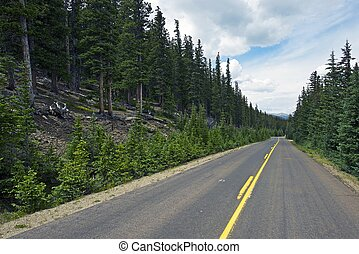 Colorado Forest Road. Rocky Mountains Paved Road Near Mount...