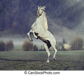 Majestic horse jumping on the green meadow with purple...