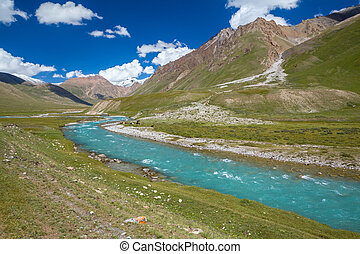 Motton blue ruver in mountains of Tien Shan at sunny day,...