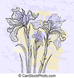 Iris flower vector illustration. - Floral background. Hand...