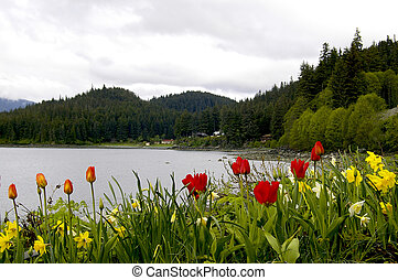 Alaskan Tulips - Alaskan bay in the Juneau area with tulips...