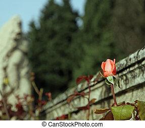 rosa, famoso,  midget, Capullo de rosa, estatua