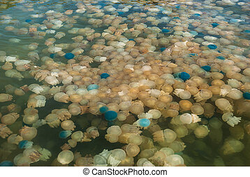 Colorful blooming jellyfish in the sea, Thailand