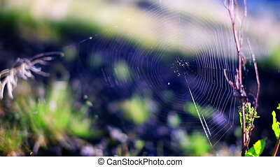 Close-up view of spider web