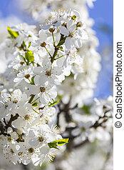 Spring blossoms against a blue sky