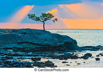 picturesque pine tree on a rocky seashore at sunrise