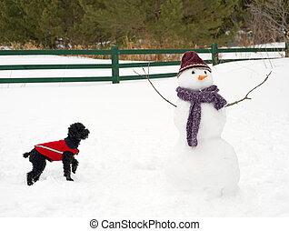 Snowman and pup. - Humorous image of a toy poodle curiously...