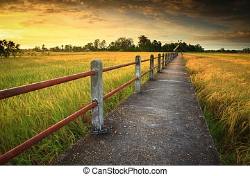 Cornfield sunset of Thailand Bridge over the cornfield