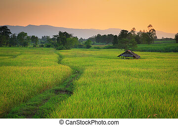 Cornfield sunset of Thailand