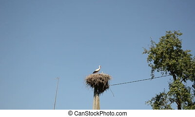 stork bird nest pole