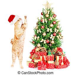 Ginger santa cat and Christmas tree. - Ginger santa cat and...