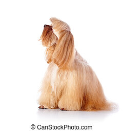 The beige decorative doggie sits on a white background. -...
