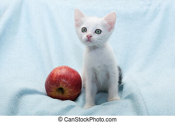 White kitten with red apple near wary looks
