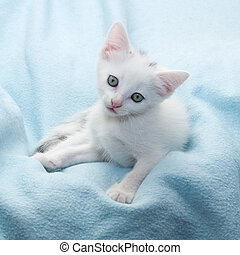 White kitten sad looking down on blue background