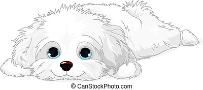 White Puppy - A cute white Havanese puppy laying down