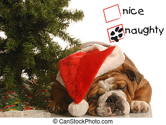 naughty christmas puppy - naughty english bulldog wearing...