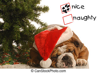 naughty or nice dog - naughty or nice english bulldog...